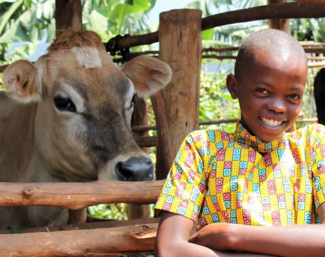 Jersey cow and small boy in Rwanda
